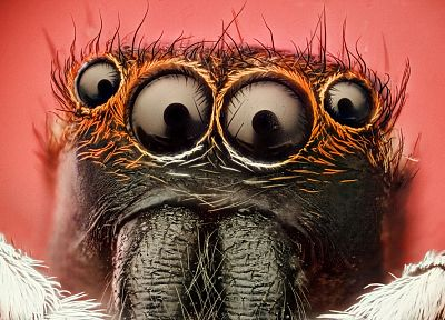eyes, insects, macro, spiders, arachnids - related desktop wallpaper
