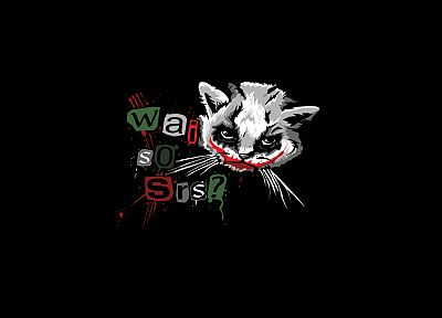 The Joker, kittens, Why So Serious? - random desktop wallpaper