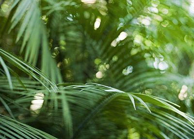close-up, nature, bokeh, rainforest, palm leaves - related desktop wallpaper