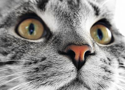 cats, animals, pets - related desktop wallpaper
