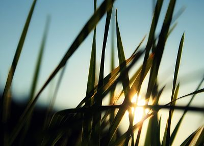 grass, sunlight, macro - random desktop wallpaper