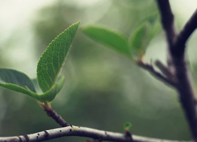 nature, leaves, depth of field - related desktop wallpaper