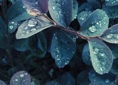 nature, leaves, plants, water drops - related desktop wallpaper