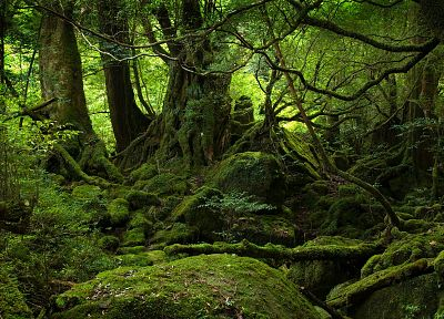 nature, trees, forests, moss - random desktop wallpaper