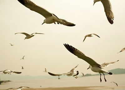 ocean, nature, birds, flock, fly, seagulls, sea shorelines - related desktop wallpaper