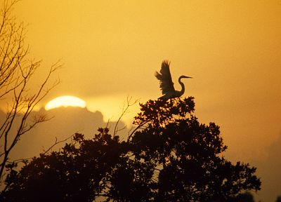 sunset, trees, birds, Florida, storks, Everglades - related desktop wallpaper