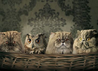 artistic, cats, animals, owls - random desktop wallpaper