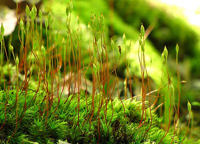 nature, macro - random desktop wallpaper