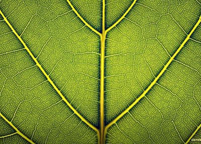 green, close-up, nature, leaf, macro, Derek Prospero - desktop wallpaper