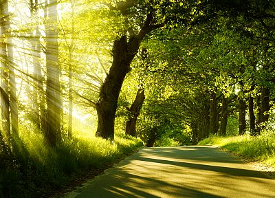 landscapes, nature, trees, sunlight, roads - related desktop wallpaper