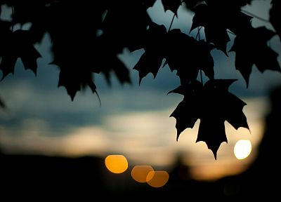 nature, leaves, silhouettes, bokeh, shade - desktop wallpaper