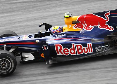 red, cars, Formula One, bull, Red Bull - related desktop wallpaper