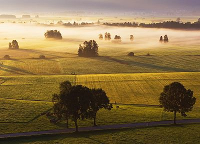 landscapes, trees, fields, mist - desktop wallpaper