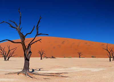 landscapes, trees, deserts - related desktop wallpaper