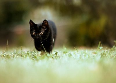 cats, grass - random desktop wallpaper