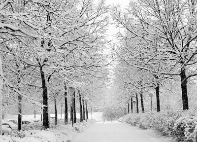 winter, snow, trees, roads, parks - related desktop wallpaper