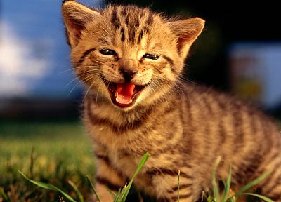 nature, cats, animals, tongue, kittens - related desktop wallpaper