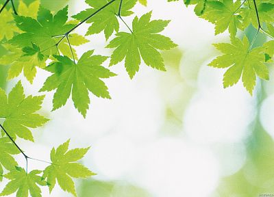 green, nature, leaves, depth of field - random desktop wallpaper