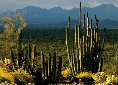 green, Arizona, national, cactus - random desktop wallpaper