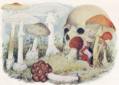 death, mushrooms, toxic - related desktop wallpaper