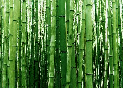 nature, bamboo - random desktop wallpaper