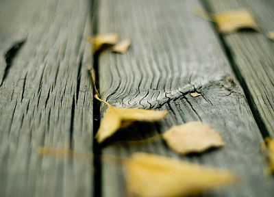 wood, leaves, fallen leaves - random desktop wallpaper