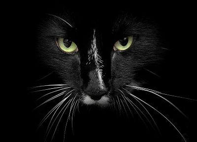 eyes, cats, animals, feline - related desktop wallpaper