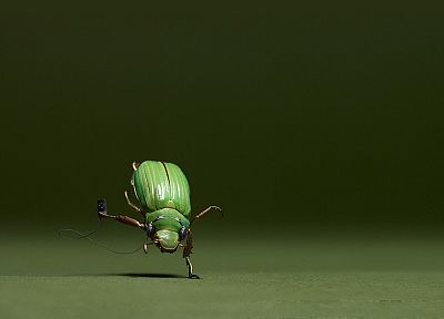 animals, insects, iPod, funny - desktop wallpaper