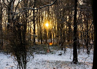sunset, landscapes, winter, Sun, forests - random desktop wallpaper