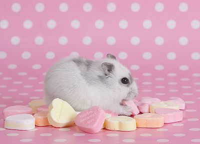 pink, hamsters, hearts, candies - desktop wallpaper