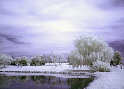 winter, snow, willow - desktop wallpaper