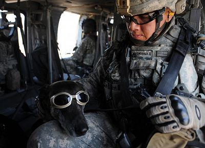 soldiers, army, military, animals, dogs - random desktop wallpaper