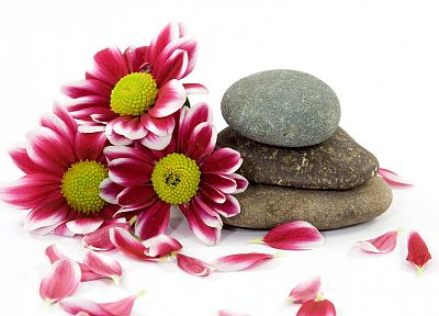 flowers, stones, pebbles - random desktop wallpaper