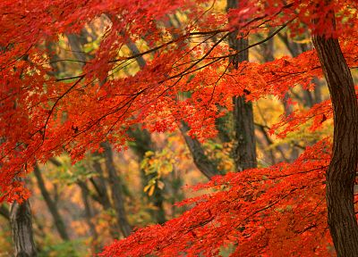 nature, trees, autumn, forests, leaves, woods - desktop wallpaper