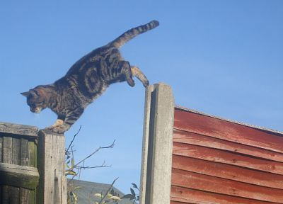 cats, animals, jumping - related desktop wallpaper
