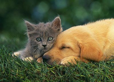 cats, animals, grass, dogs, baby animals - related desktop wallpaper