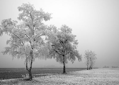 trees, snow landscapes - random desktop wallpaper