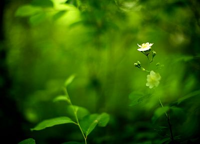 green, nature, flowers - random desktop wallpaper