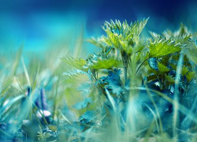 flowers, grass, macro, ground, herbs - related desktop wallpaper