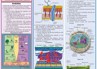 science, Biology, infographics - related desktop wallpaper