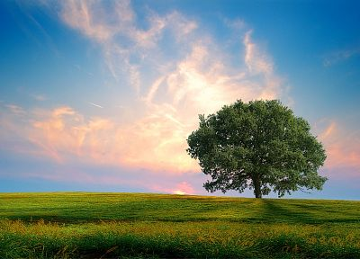 landscapes, nature, trees, fields, DeviantART - desktop wallpaper