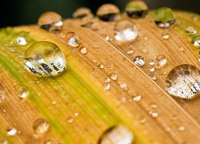 water drops, macro, condensation - desktop wallpaper