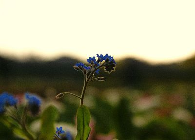 landscapes, flowers, depth of field - related desktop wallpaper