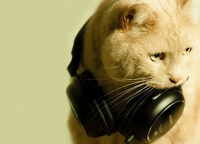 headphones, cats, animals - random desktop wallpaper