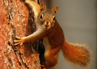 animals, squirrels, tree trunk - related desktop wallpaper