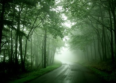 nature, forests, mist, roads - random desktop wallpaper