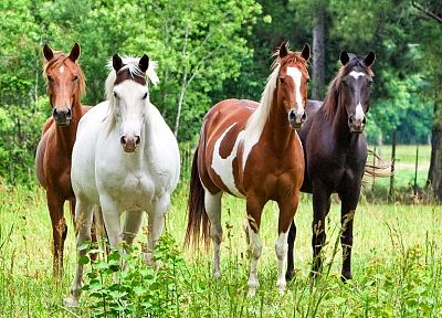 animals, horses - related desktop wallpaper