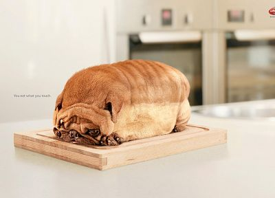 animals, dogs, bread - related desktop wallpaper