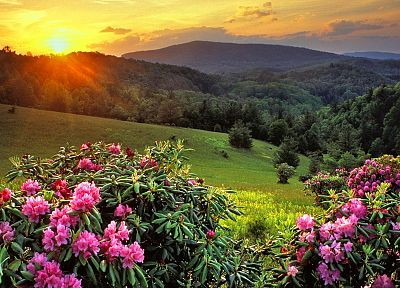 mountains, landscapes, nature, Sun, trees, Rhododendron - related desktop wallpaper