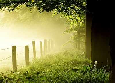 green, landscapes, nature, trees, fences, mist - related desktop wallpaper